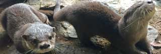 Otters named!